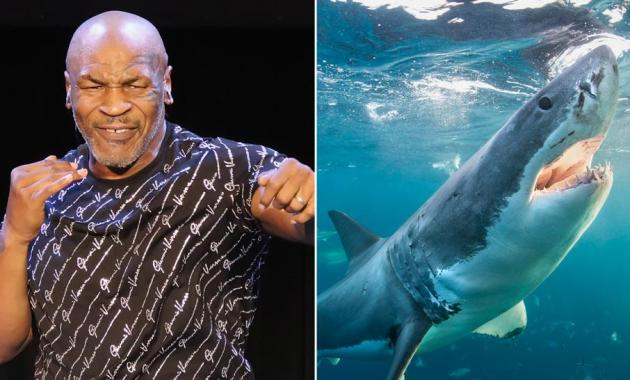 Mike Tyson 'takes out' a shark as a major aspect of Discovery's 'Shark Week'