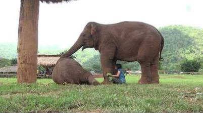 Elephant insists her caretaker stops spending time with visitors